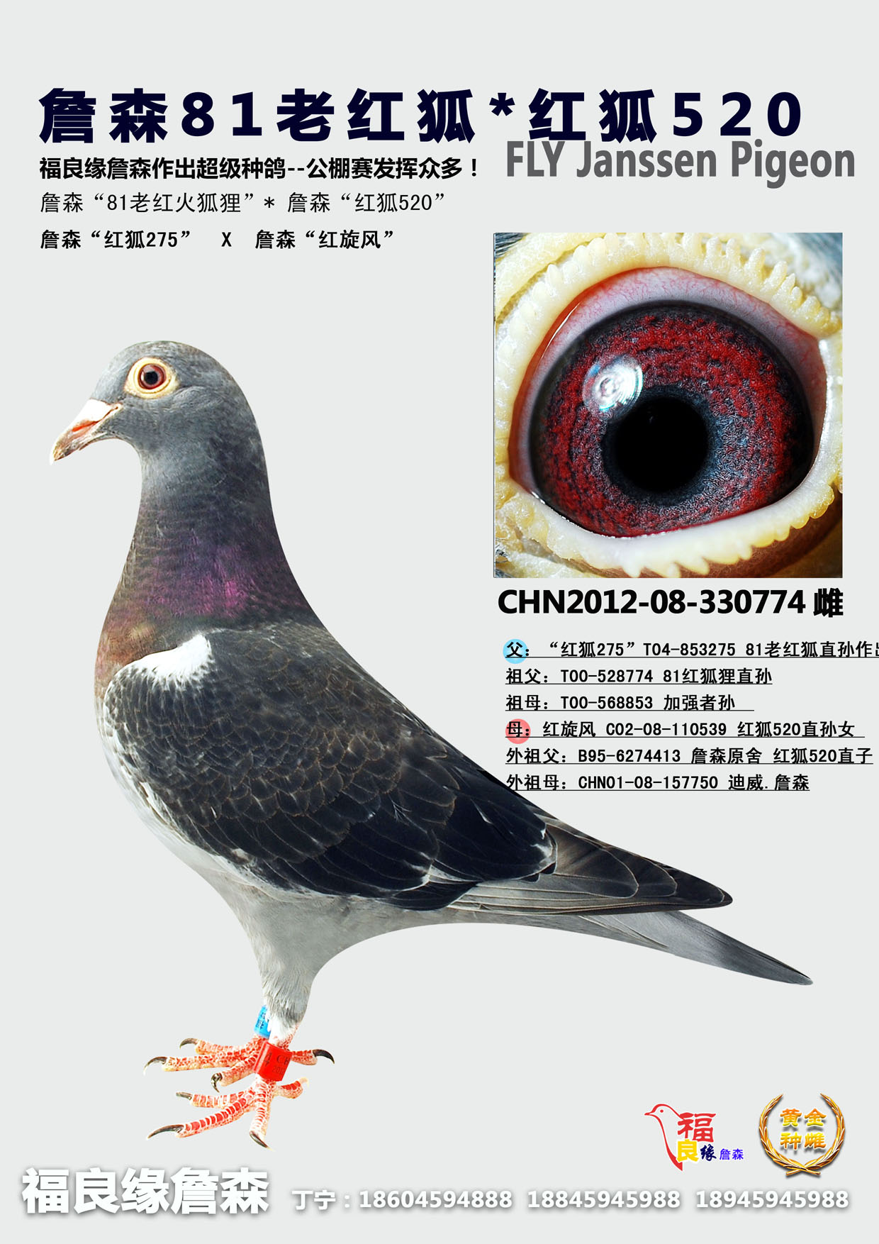 福良缘詹森 - 中信网铭鸽展厅 www.ag188.com图片