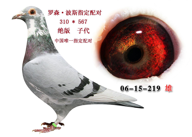 鸟类鸽鸽子动物图示鸟教学1500_1069猪猪侠之恐龙日记有什么龙图片